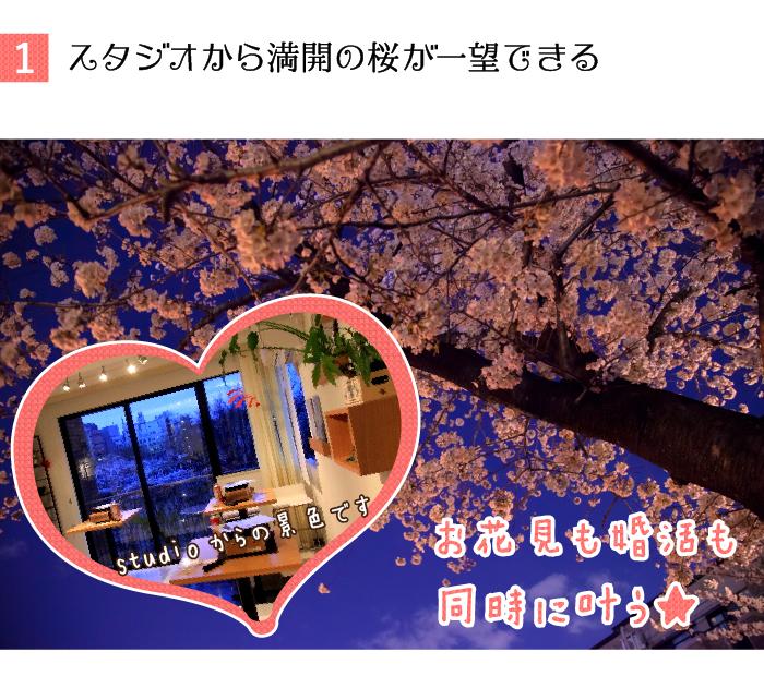 イベント会場から満開の桜が一望できる